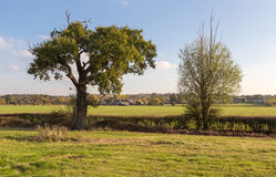 Dos árboles en el campo de Essex del otoño Imágenes de archivo libres de regalías