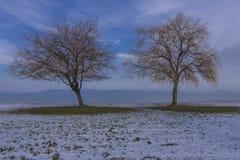 Dos árboles en invierno fotografía de archivo libre de regalías