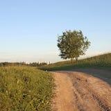 Dos árboles en la colina cerca del camino Foto de archivo
