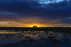 Dos árboles en la puesta del sol fotografía de archivo