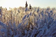 Dos árboles en nieve Fotografía de archivo libre de regalías