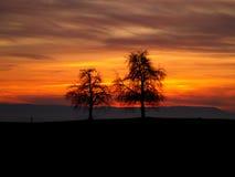 Dos árboles en puesta del sol fotografía de archivo libre de regalías