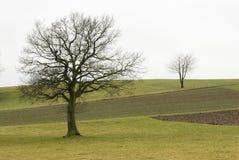 Dos árboles en un campo imágenes de archivo libres de regalías