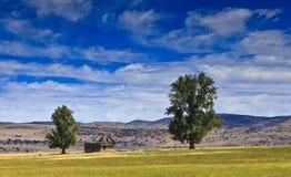 Dos árboles en un campo abierto con el granero Fotografía de archivo