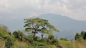 Dos árboles en un prado verde contra la perspectiva de la silueta de las montañas debajo de un cielo gris metrajes