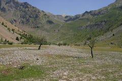 Dos árboles en un valle de la montaña Fotografía de archivo
