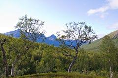 Dos árboles finos Imagen de archivo