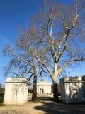 Dos árboles grandes en el patio del castillo en el parque de la bagatela, París fotos de archivo libres de regalías