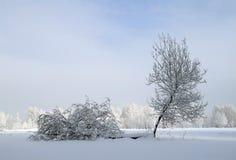 Dos árboles jovenes Foto de archivo libre de regalías