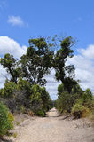 Dos árboles que forman el arco natural sobre el camino Foto de archivo