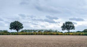 Dos árboles simétricos con un campo cosechado en el primero plano y las nubes azules en el fondo imagenes de archivo