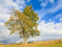 Dos árboles solos del otoño en fondo del cielo. Imágenes de archivo libres de regalías