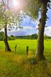 Dos árboles y un prado en el fondo Foto de archivo