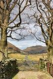 Dos árboles y una puerta de la granja imagen de archivo libre de regalías
