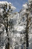 Dos árboles y Yosemite Falls Imagenes de archivo
