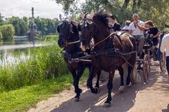 Dos él hace que los caballos de bahía en arnés lleven a turistas en el carro y el carro en el verano Foto de archivo libre de regalías