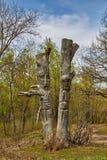 Dos ídolos de madera en la madera Imagenes de archivo