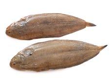 Dos únicos pescados Imágenes de archivo libres de regalías