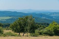 Dos abedules en el fondo de colinas y de campos enselvados entre ellos Imagen de archivo libre de regalías