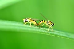 Dos abejas Foto de archivo
