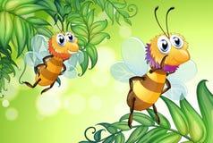 Dos abejas que vuelan con muchas hojas Imagen de archivo