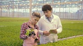Dos agrónomos que trabajan la colocación en invernadero del complejo agroindustrial almacen de metraje de vídeo