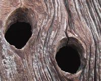 Dos agujeros de nudo en una vieja tarjeta del granero Fotografía de archivo