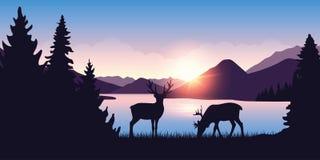 Dos alces pastan por el río en el bosque en la salida del sol libre illustration