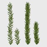 Dos alga marina, hierba subacuática clásica Imagenes de archivo