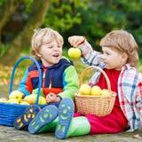 Dos amigos adorables del niño pequeño que comen manzanas en el jardín del hogar, Fotografía de archivo libre de regalías