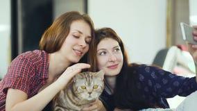 Dos amigos felices de las mujeres que mienten en cama y que hacen el selfie con el gato y se divierten en cama en casa metrajes