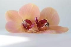 Dos anillos bonitos en flor Imágenes de archivo libres de regalías