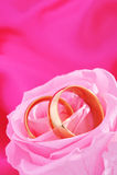 Dos anillos con subieron Fotos de archivo libres de regalías