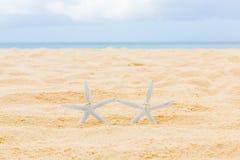 Dos anillos de bodas con dos estrellas de mar en una playa tropical arenosa W Imagen de archivo