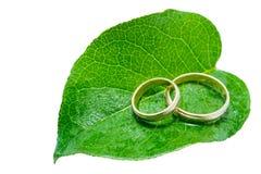 Dos anillos de bodas en una hoja verde Fotografía de archivo