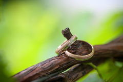 Dos anillos de bodas en una rama de la vid Foto de archivo libre de regalías