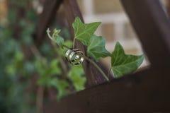 Dos anillos de bodas en una vid ramifican con el backgroung borroso Fotografía de archivo