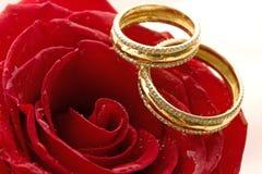 Dos anillos de bodas y rosas rojas Imagen de archivo libre de regalías