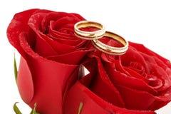 Dos anillos de bodas y rosas rojas Imágenes de archivo libres de regalías