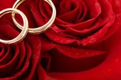 Dos anillos de bodas y rosas rojas Fotografía de archivo