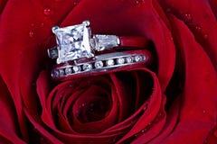 Dos anillos en pétalos color de rosa Imágenes de archivo libres de regalías