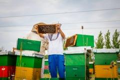 Dos apiarists, apicultores están comprobando abejas en el panal de madera Imagenes de archivo