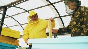 Dos apicultores que comprueban marcos y que cosechan la miel mientras que trabaja en colmenar el día de verano Imagen de archivo libre de regalías