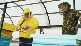 Dos apicultores que comprueban marcos y que cosechan la miel mientras que trabaja en colmenar el día de verano Fotos de archivo