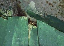 Dos avispas miran hacia fuera de la grieta en el tejado Varones de avispas Fotos de archivo