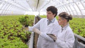 Dos ayudantes de laboratorio consideran la ensalada verde que se coloca en premisa de la explotación agrícola almacen de video