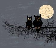 Dos búhos en el bosque de la noche Imagenes de archivo