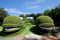 Dos ballenas del arbusto Imagen de archivo libre de regalías