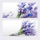 Dos banderas florales de la acuarela con el ramo de lavanda Fotos de archivo libres de regalías