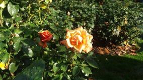 Dos bellezas Foto de archivo libre de regalías